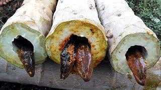 Very Strange Cooking Food in PAPAYA TREE | Roasted EELS Using Papaya Tree