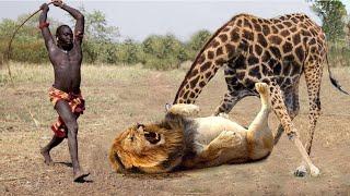 Mother Giraffe Kicks Lion Head and Kills it To Save Her Baby – Lion vs Bear, Elephant, Wild Dogs
