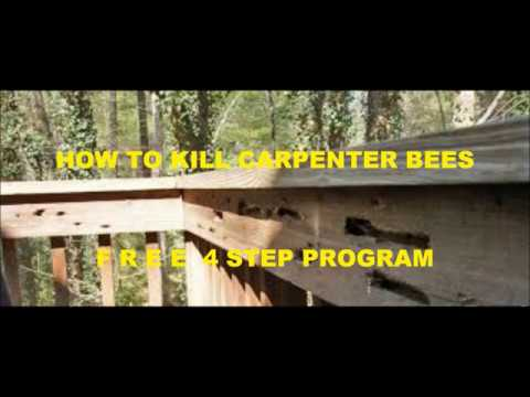 HOW TO KILL CARPENTER BEES VIDEO