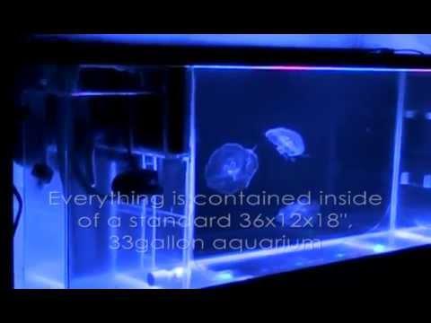 JellyFish Aquarium #3 - DIY Tank In Operation
