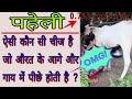 Bujho To Jane | Paheliyan | Common Sense Question | Riddles | IQ Test | GK | 8 majadar Paheli