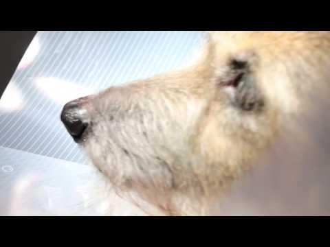 A dog has severe diarrhoea