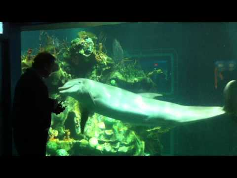 Dolphin Show at the Living Seas with Nemo & Friends - EPCOT
