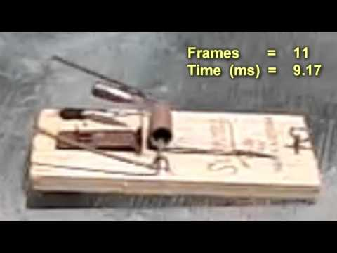 How Fast is a Mouse Trap?