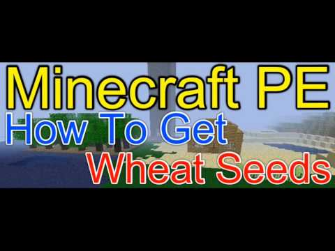 Minecraft Pocket Edition | How To Get Wheat Seeds | NEWS