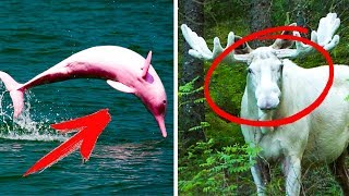 5 Mysterious Animals That You Won`t Believe Exist