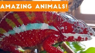 The Most Amazing Animals on Earth Compilation 2017