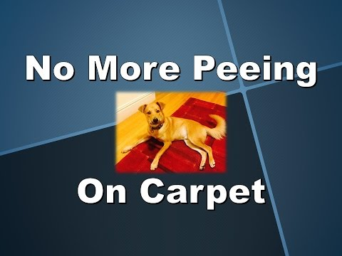 Stop Pets Peeing on Carpet