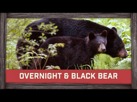 Overnight & Black Bear Mother and Her Cub!