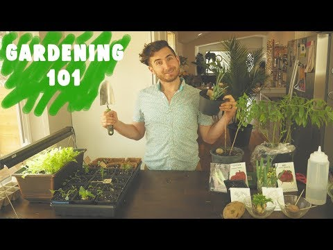 Beginners Guide to Growing Your Own Food and Gardening