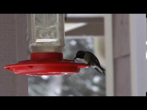 Keep the hummingbird feeders from freezing