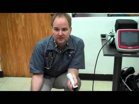 Dog  Arthritis Laser Therapy (Brookfield IL 60513,  La Grange Park, Lyons, Riverside
