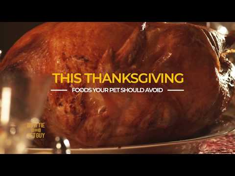Foods Your Pet Should Avoid On Thanksgiving