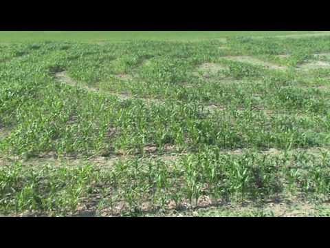 Corn Maze Cutting Video