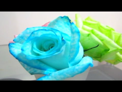 DIY how to color roses