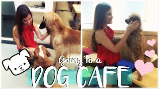 Download Visiting a Dog Cafe in Seoul, Korea Travel Vlog | The Travel Breakdown Video