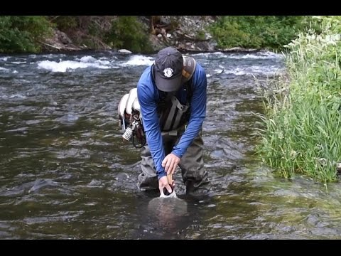 How to Choose the Right Fly (Part I)