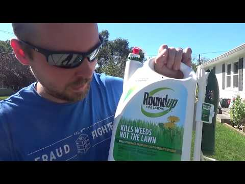 Fall Weed Control with Roundup For Lawns