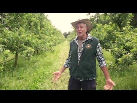 Coral Tree Organics - Apple Cider Vinegar Process -  Episode 3: Summer in the Organic Apple Orchard