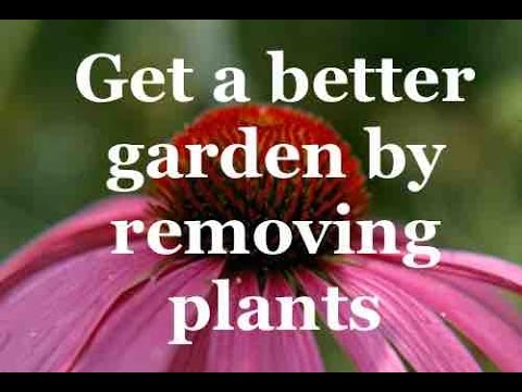 Get a better garden by removing plants