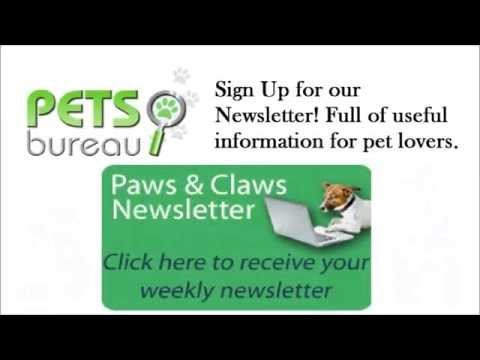 Pets Bureau Pet ID Tags - Track Your Missing Pets