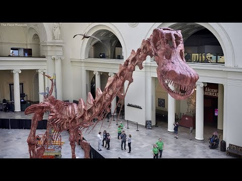 WATCH: Scientists assemble largest dinosaur discovered to date