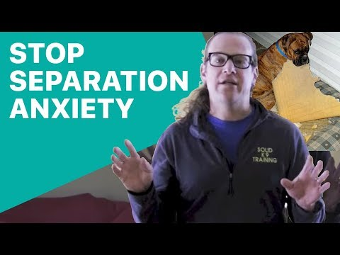 Separation Anxiety Can be Stopped - Solid K9 Training