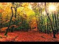 Calm Piano Music: Beautiful Relaxing Music, Romantic Music, Instrumental Music by Relax Music tv