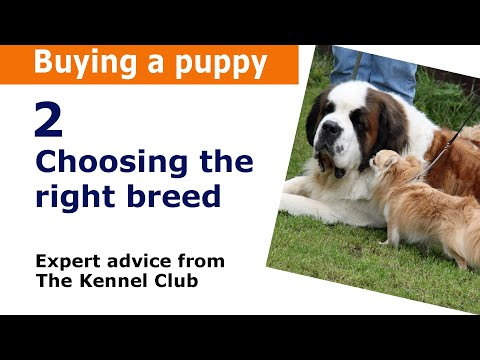 How to choose the right dog breed. Kennel Club puppy buying guide