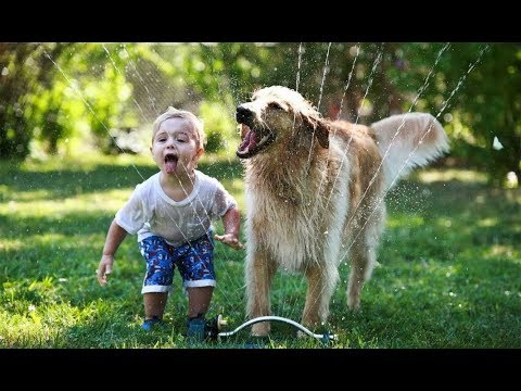 Golden Retriever Protecting and Playing Babies & Kids -  Dog and Baby COmpilation
