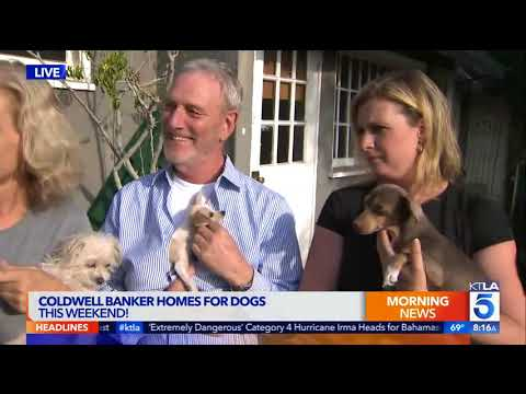 Coldwell Banker Teams Up with Shelters for National Homes for Dogs Adoption Event in LA Sept 9-10