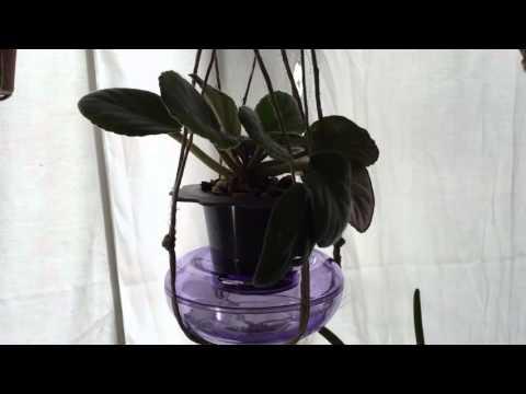Dandy Pots for African Violets?