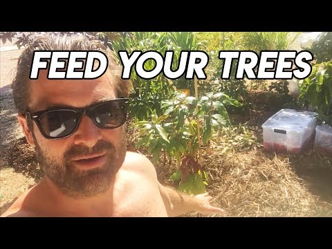 Ep157 - Feeding Mango Trees with Aztec Gold Compost from Jay Berringer