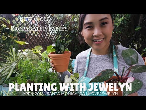 Planting with Jewelyn: new & old plants + propagation babies | April 2018 | ILOVEJEWELYN