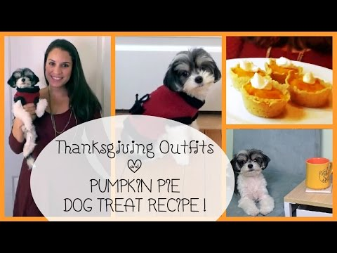 #GinaAndTink Teatime: Thanksgiving Outfit Ideas & How to make Pumpkin Pie Dog Treat Recipe!
