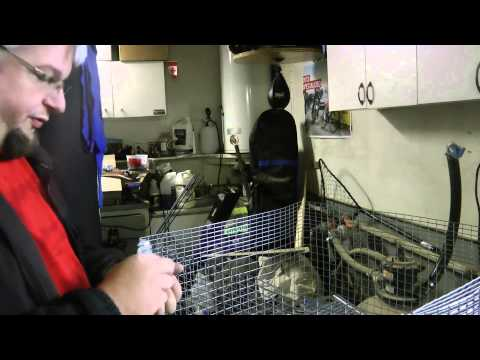 DIY - Rabbit cages