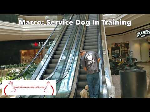 Columbus Ohio Public Access Training: Marco the Shih Tzu on Escalator with Terry Cook