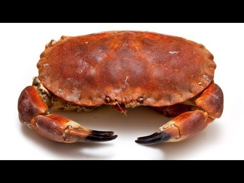 How to Prepare a Crab | 101