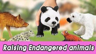 [EN] #68 Endangered animals meet extinct animals, kids education, Collecta figureㅣCoCosToy