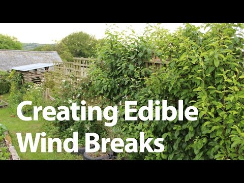 Growing Edible Wind Barriers to Protect your Vegetable Garden