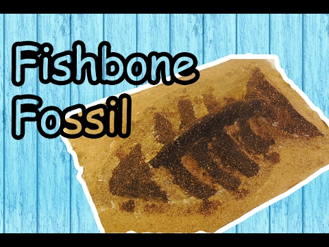 How to make fishbone fossil | TIMELAPSE DIY