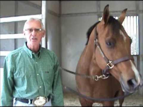 www horsecoursesonline