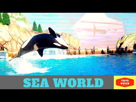 Traveler's Guide to Seaworld with toddlers | Toys Voice