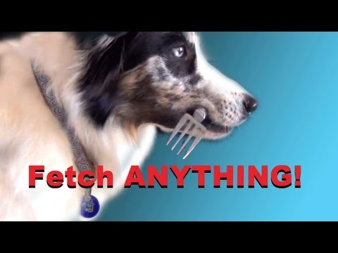 How to teach your dog to fetch ANYTHING! Dog Training