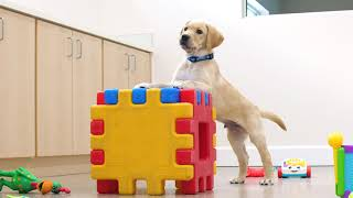 Sponsor a Puppy - Grant