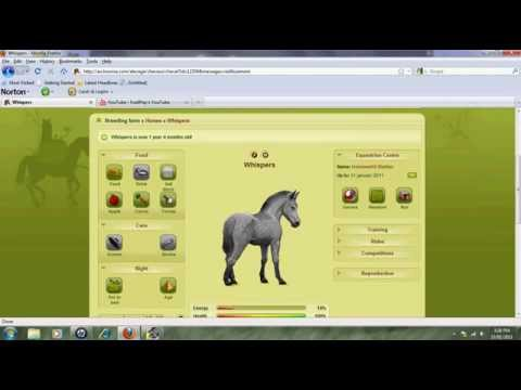 Howrse foal games (1 year 4 months)