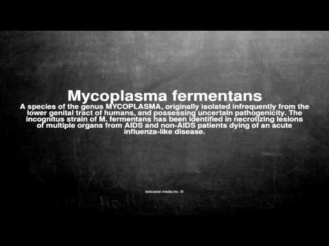 Medical vocabulary: What does Mycoplasma fermentans mean
