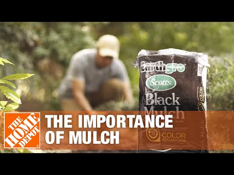 The Importance of Mulch | Mulching Your Yard