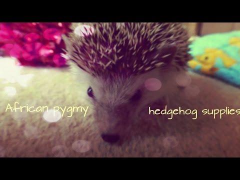 African pygmy hedgehog supplies!