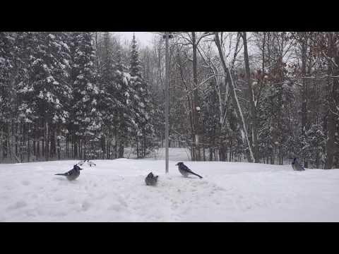 February 11 2018 - Blue Jays